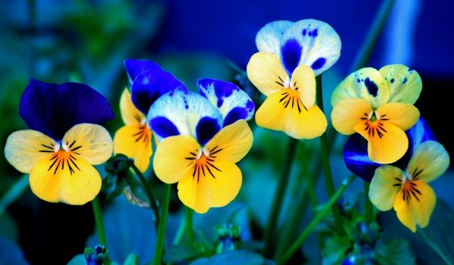 flores-terapias