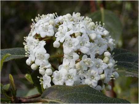 flors marfull 01