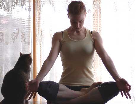 meditanimal