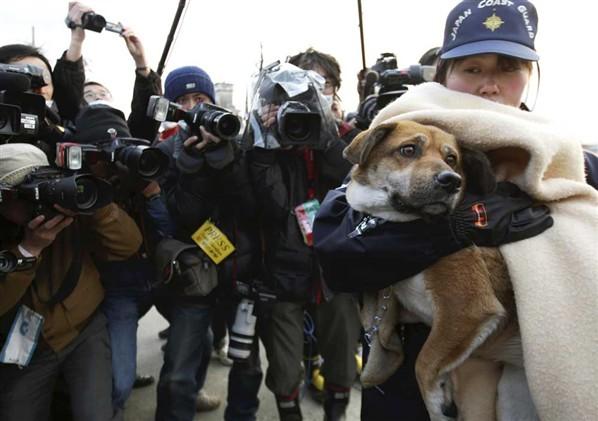 Héroes anónimos. Fotos de rescate de animales
