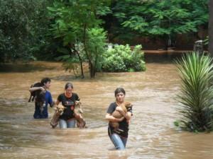 rescate-Salvando animales