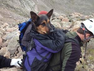 rescate-excursionista-salva-perro-montana