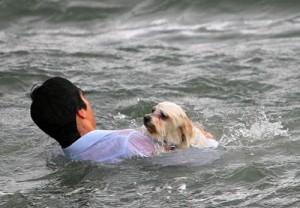 rescate-salvando-perrito-1