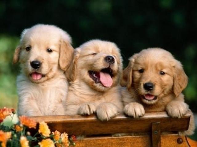 10-mandamientos-perro