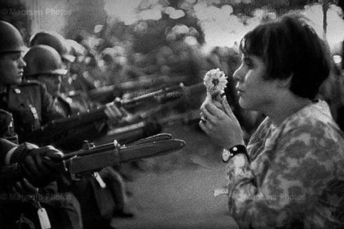 flores-armas