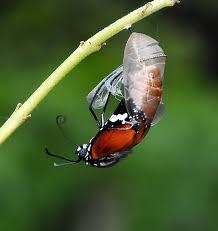 mariposas-nacen