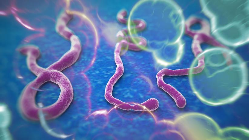 ebola-enfermedad-cura