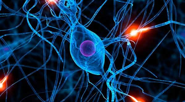 biodescodificacion-programas-neuronas