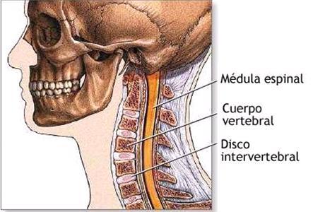 Biodescodificación vértebras cervicales. Dolor cervical