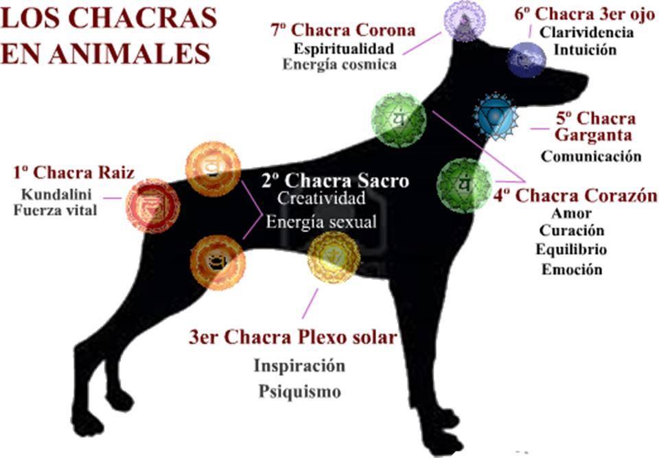 Chakras en animales, perros, gatos, caballos