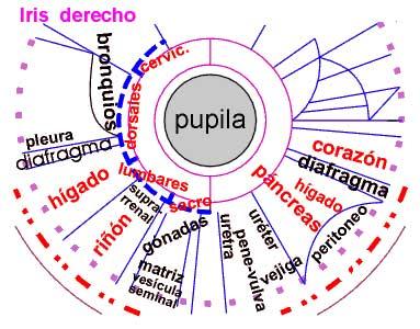 Un universo en el ojo - Iriología
