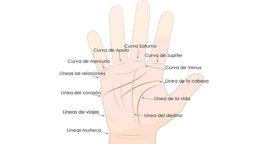 significado-lineas-manos