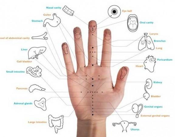 dedos-organos-metodo-japones