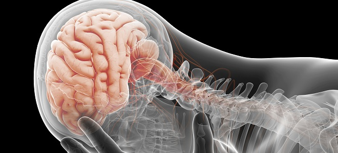 Relajar el sistema nervioso central
