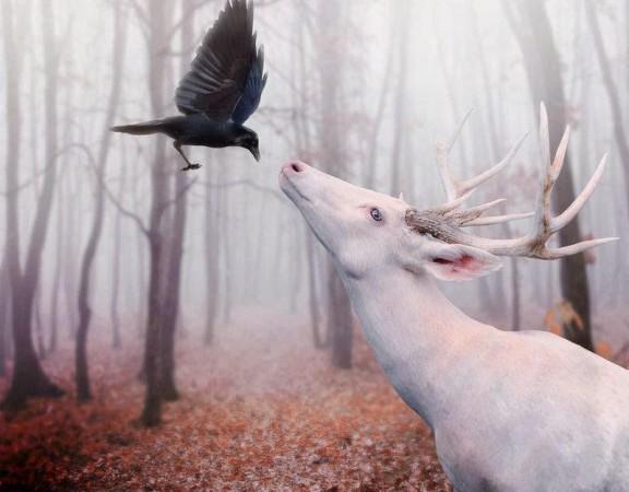pas-ciervo