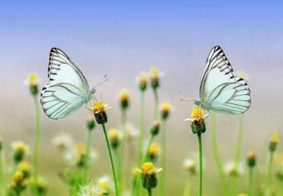 cuando-nos-volvamos-a-encontrar-mariposas-blancas