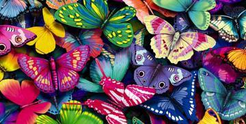 Un mundo sin mariposas